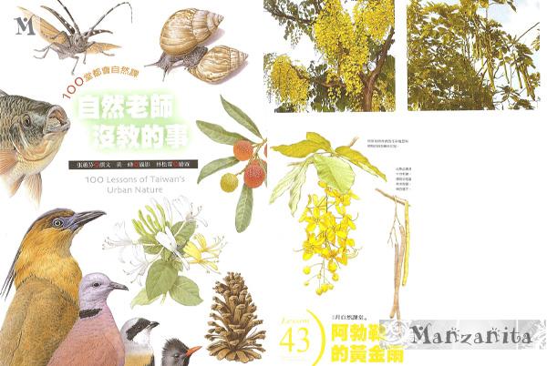 2011-6-11白河賞蓮12.jpg