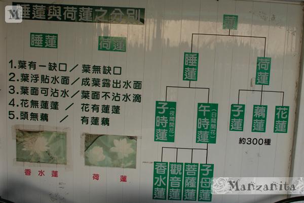 2011-6-11白河賞蓮15.jpg