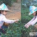 12-02-茶緣農場5.jpg