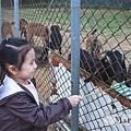12-02-茶緣農場1.jpg