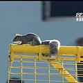 Squirrel show (9)