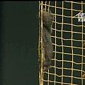 Squirrel show (10)
