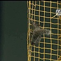 Squirrel show (11)