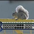 Squirrel show (13)