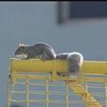 Squirrel show (15)