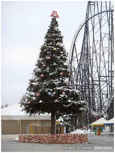 好大好高的聖誕樹