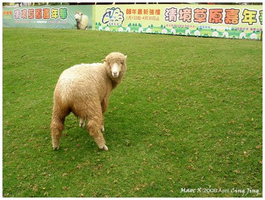 偷尿尿的羊