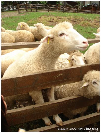 因為太想吃飼料 而爬到欄杆上