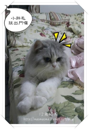 12Y健檢-01.jpg