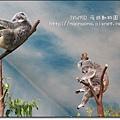 夜遊zoo-02