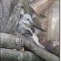 夜遊zoo-06