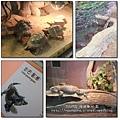 夜遊zoo-09