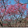陽明山06.JPG