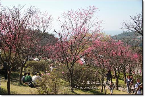 陽明山10.JPG