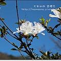陽明山11.JPG