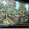 海洋公園46.JPG