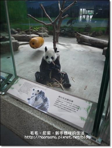 動物園01