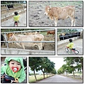 池上動物園03.jpg
