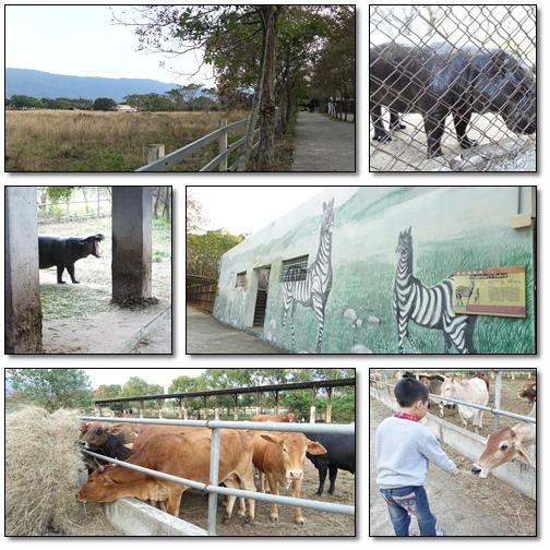池上動物園02.jpg