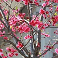 三峽2011.02.27-041.JPG
