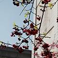 三峽2011.02.27-033.JPG