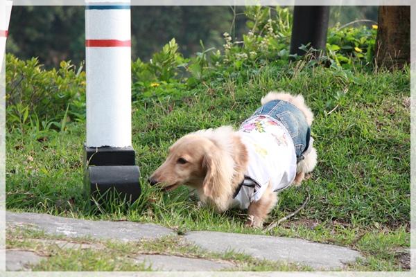 6028妹家軍生日~2009.11.28-042.JPG