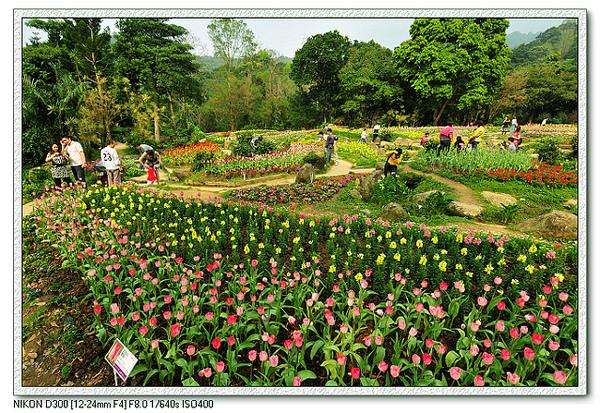 花園1.jpg