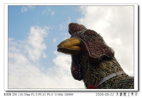 藍天下的雞頭?