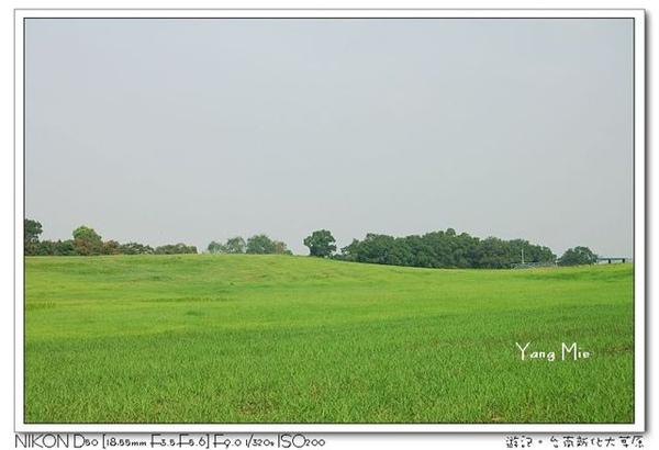 大草原1.jpg