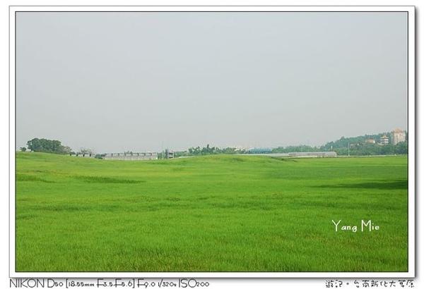 大草原2.jpg