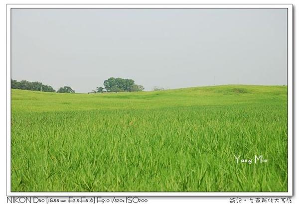 大草原3.jpg