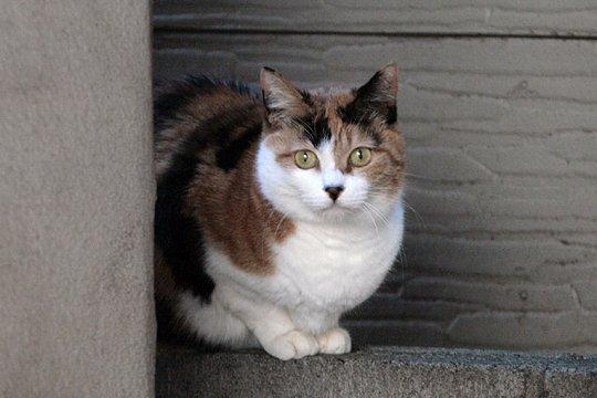 東京街貓.jpg