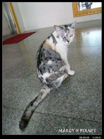 上人米養的貓咪