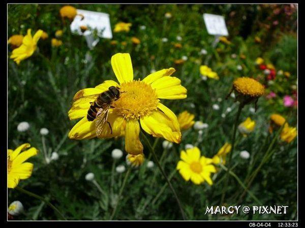 我被這隻蜜蜂嚇到=.=