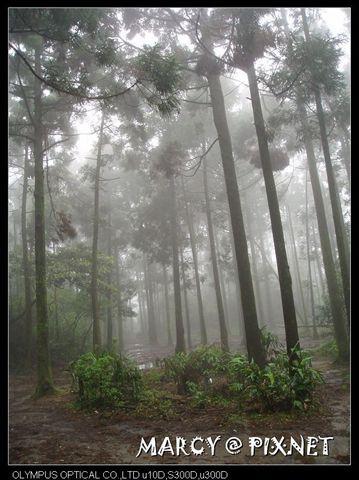 道路旁的樹林