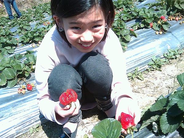 20110206採草莓.jpg