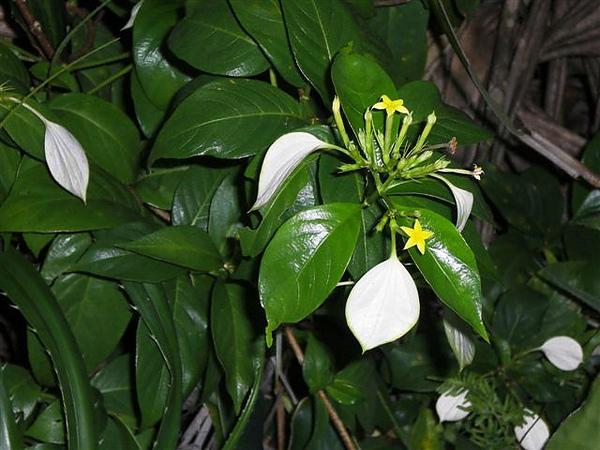 綠島~金枝玉葉