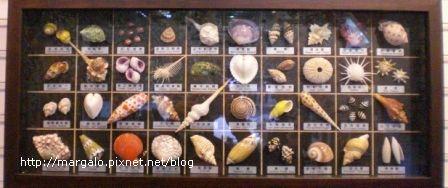 金谷貝殼館