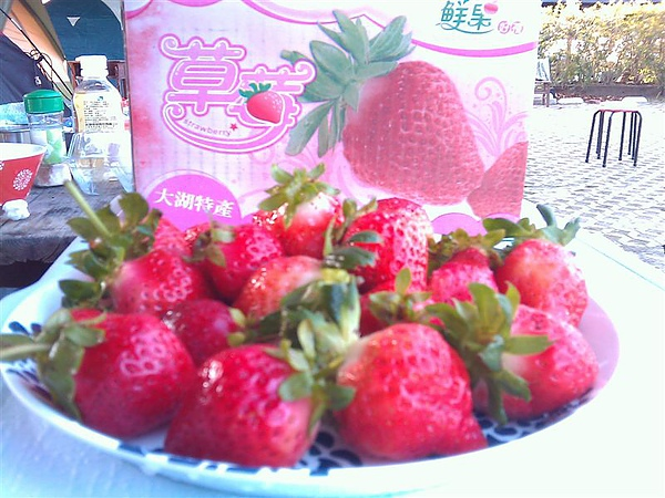 20110206採草莓 (24).jpg