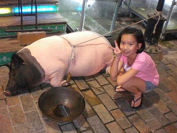 台東~大頭目野食館門口的麝香豬