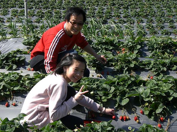 20110206採草莓 (19).JPG
