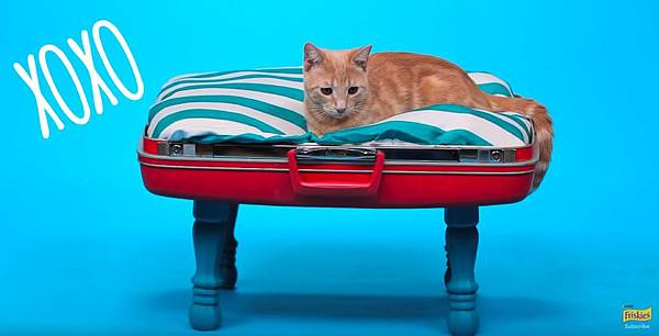 DIY Cat Toys - How to Make a Suitcase Bed - YouTube.jpg