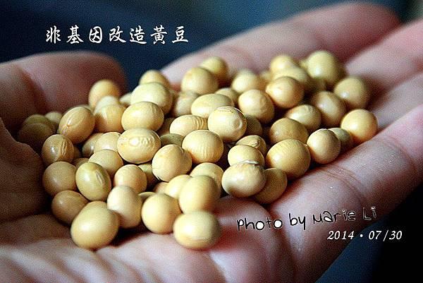 自製豆漿-02