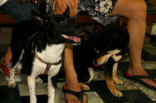 20080629Marie狗狗派對 2008-06-29 084.JPG
