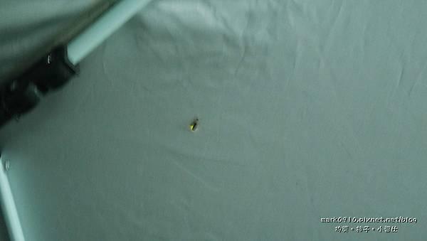 P1270528有隻螢火蟲跑進我們的客廳帳.JPG