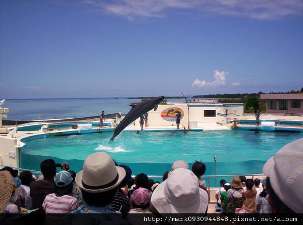 海豚表演囉