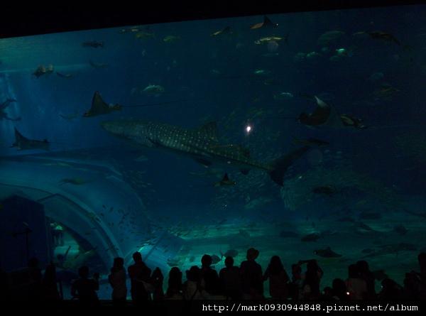 美之海水族館