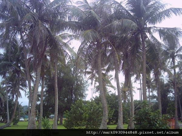 自由女神旁的椰子樹
