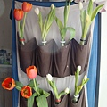 20130921buy tulips at Graffton's St.