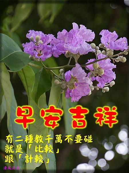 DSC0895084早安吉祥.jpg